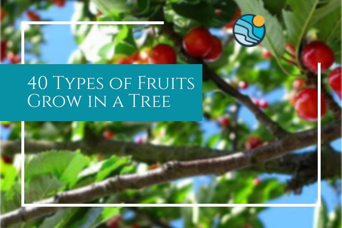 40 fruit type tree