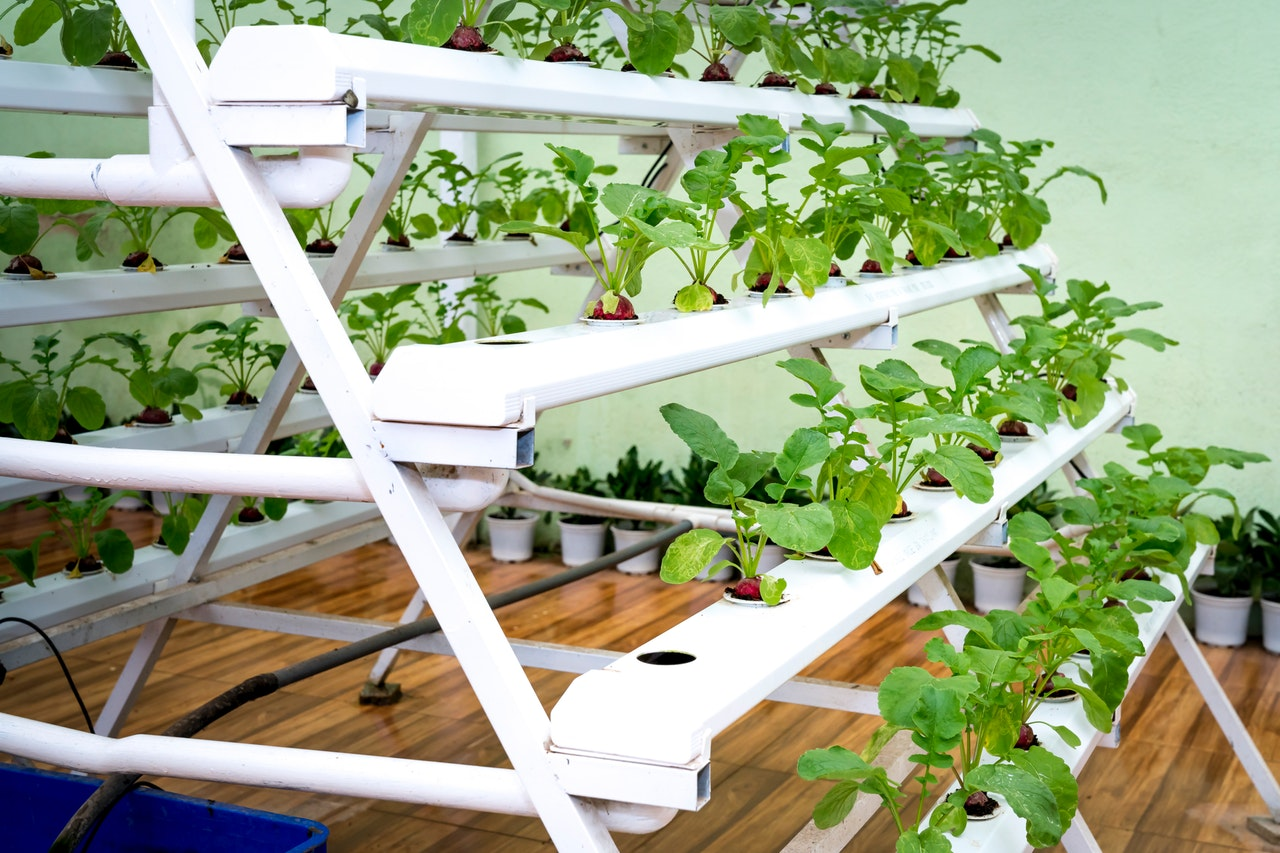 growing own food inside home