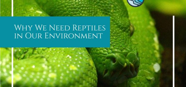 reptiles in our environment
