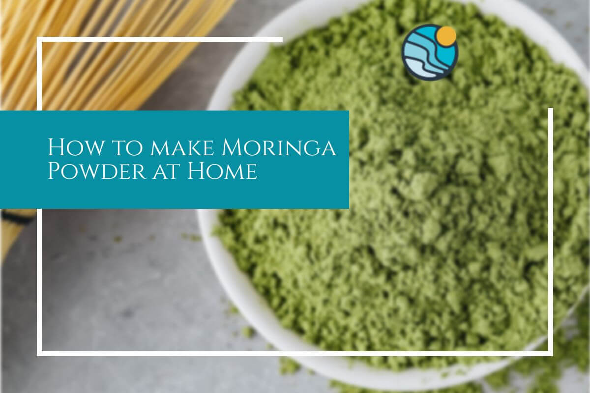 making moringa powder from home